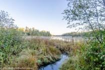 A tributary feeds Lake Itasca.