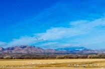 Bosque del Apache Wildlife Refuge near Socorro, New Mexico.