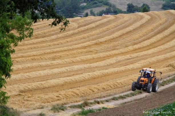 Travaux des champs, Lauzerte, 23 juin 2015
