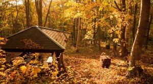 落ち葉公園 - Fallen leaves park