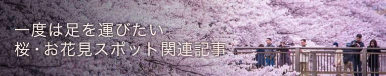 桜関連記事
