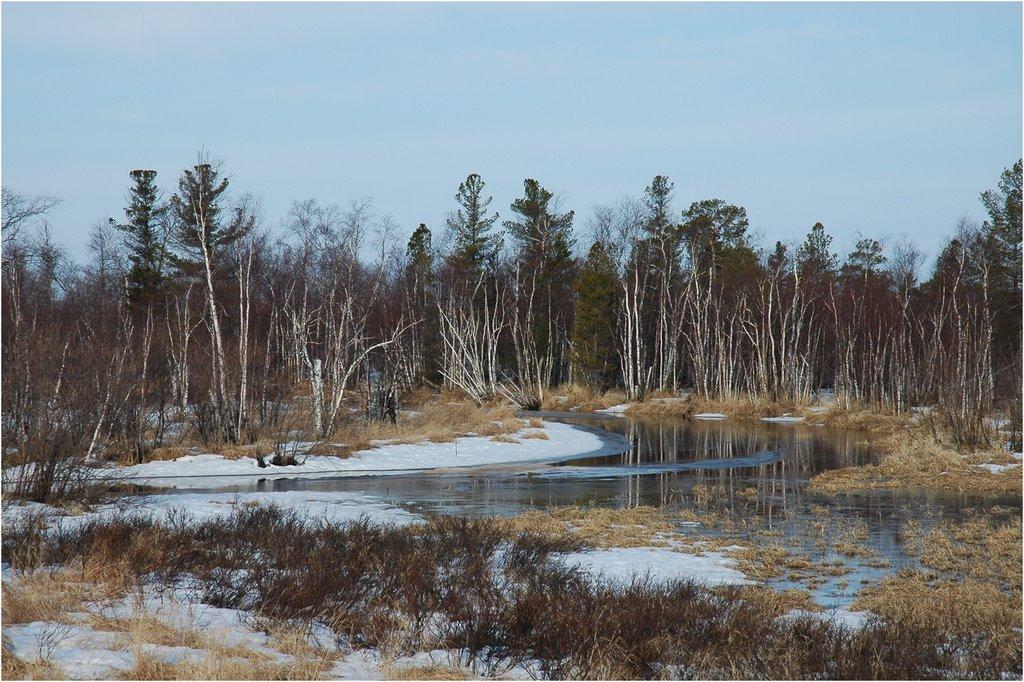 Фото Весенний лес в городе Заводопетровский
