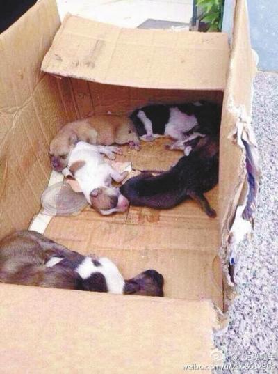 飼養員當著狗媽媽摔死7只小狗 被調離崗位(圖)-搜狐新聞