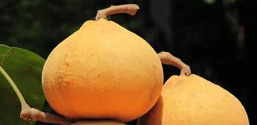 【泰國美食攻略】你所不知道的泰國奇葩水果