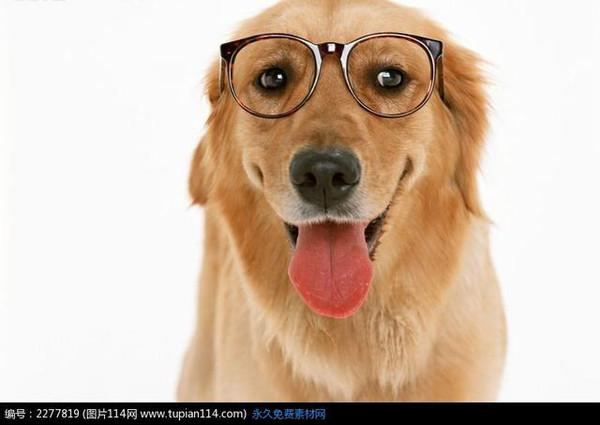 狗狗吃大便該怎么辦?狗為什么會吃屎?