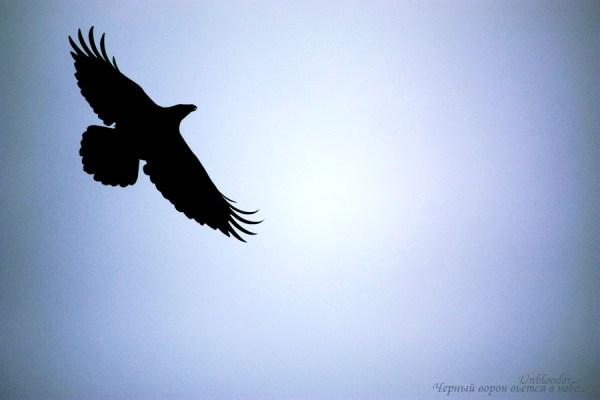 Черный ворон вьется в небе... / Черный ворон в небе