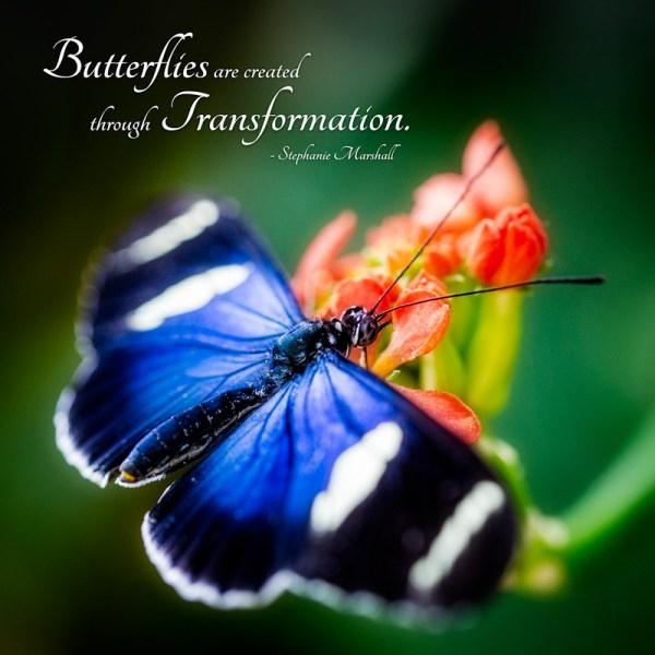 Butterflies are created through Transformation. -Stephanie Marshall