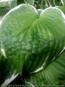 The ribs in the leaf form a pattern