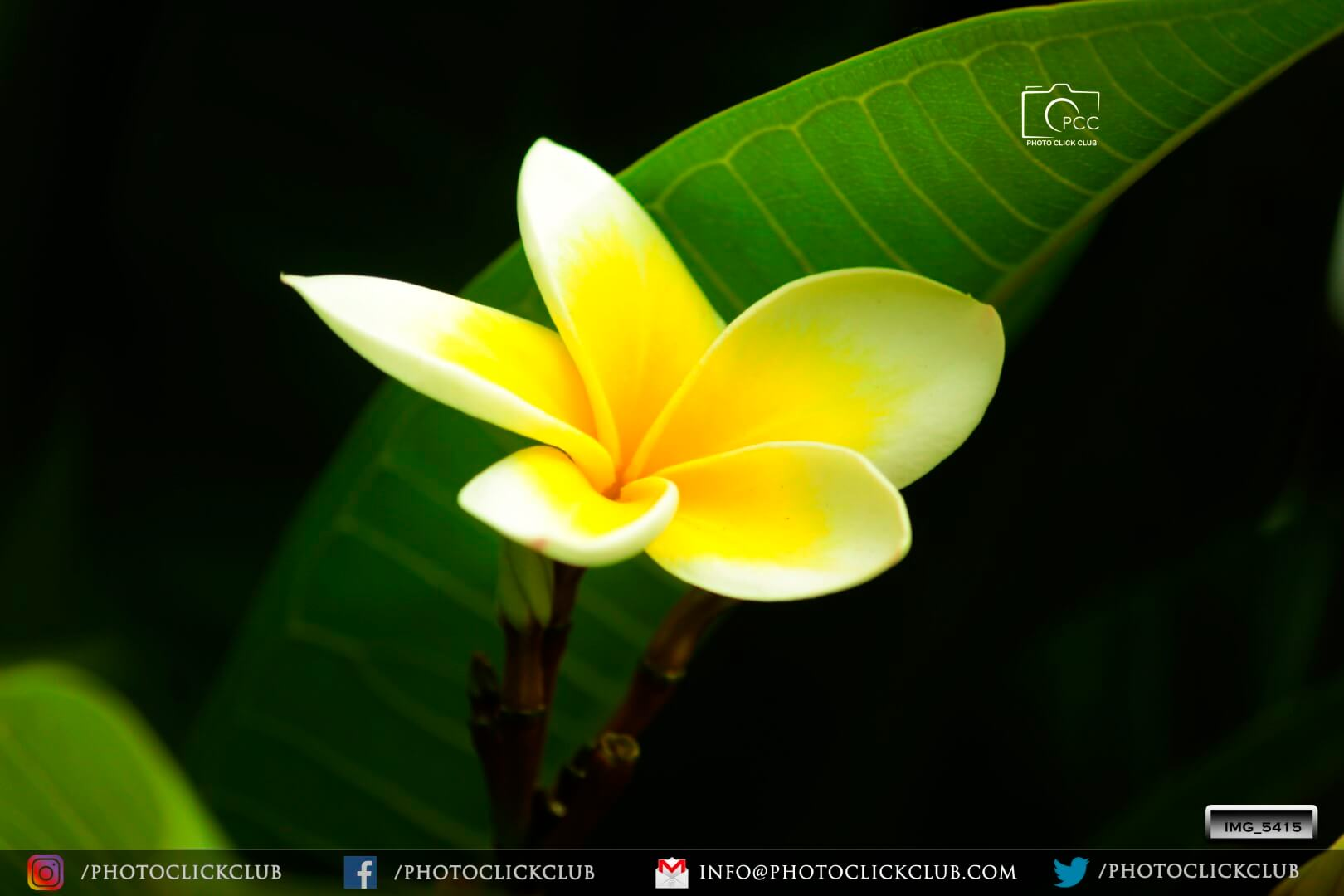 Yellow Flower - by photoclickclub