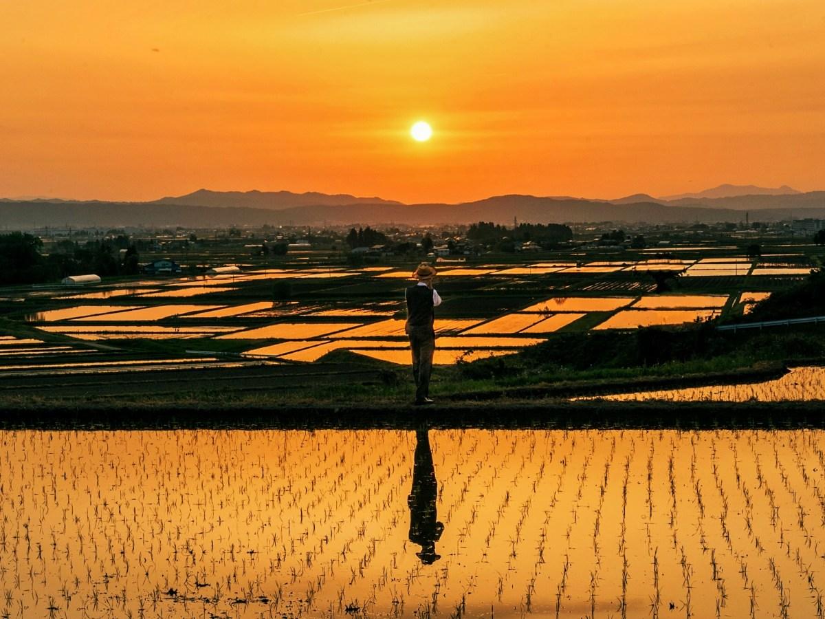"The Grand Prize ""Hope for good harvest"" Photographer: Cheng Tongjun (From China), Location: Aizuwakamatsu, Fukushima Prefecture, Japan"