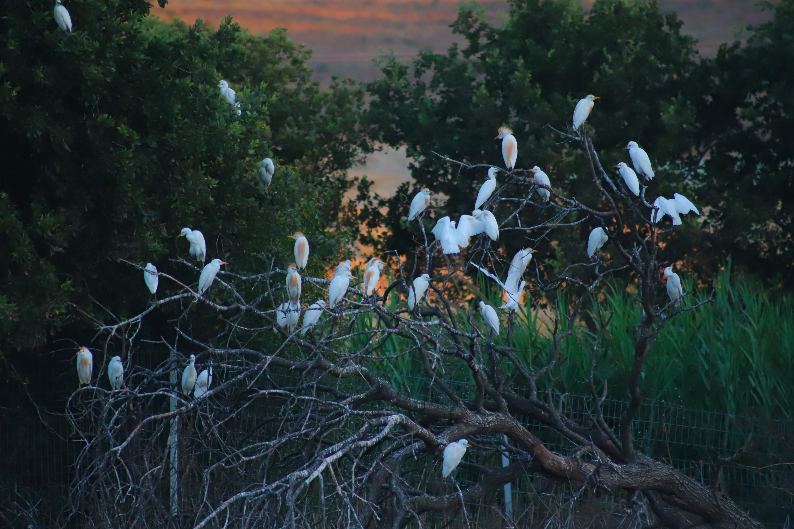 Migrating birds, the winner of bird photography competition
