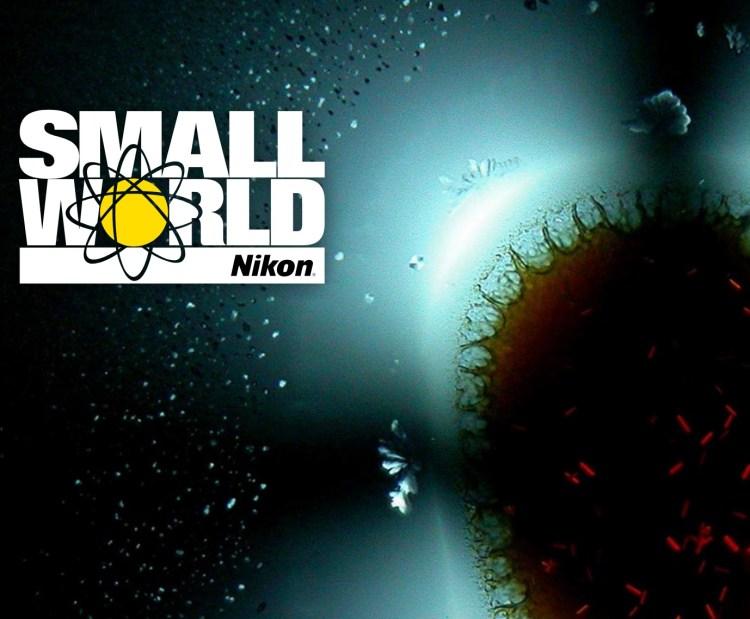 Nikon Small World Competition 2021 - logo