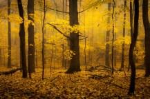 Dundas Valley in fog Ontario