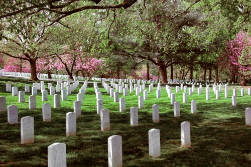 Rows of graves at the Arlington National Cemetery