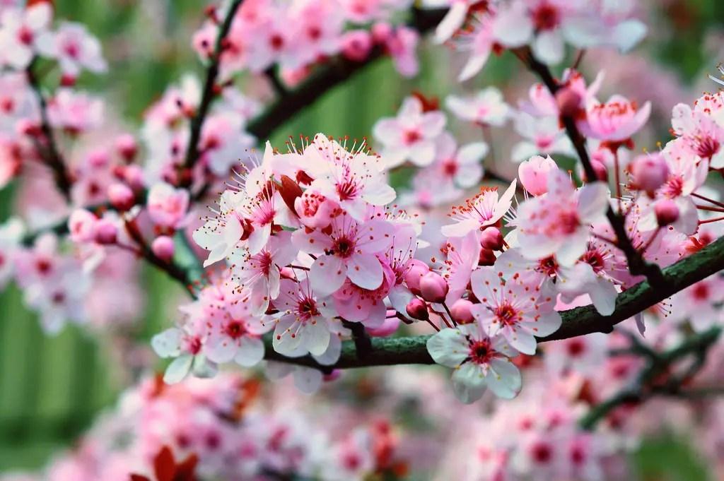 spring10_FINAL