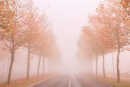 Foggy autumn fine art print