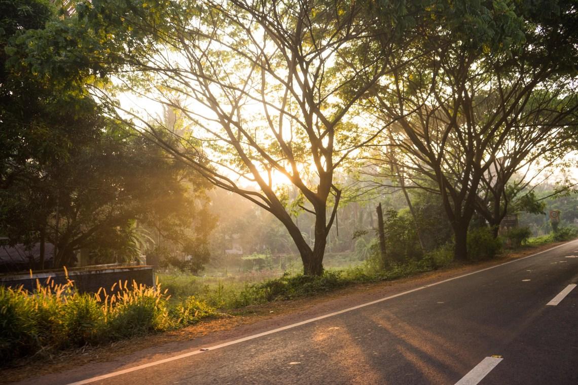 Sun rays shining through a tree hitting the street