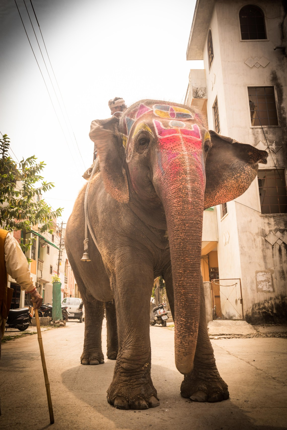 An elephant as seen roaming around the streets of Indore, India
