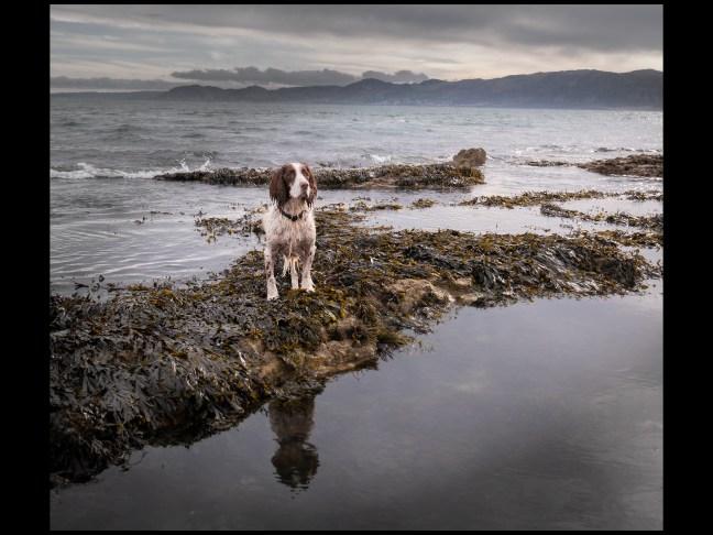 Sea Dog by Keith Heyworth