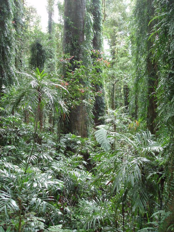 Tropical Plants Uk