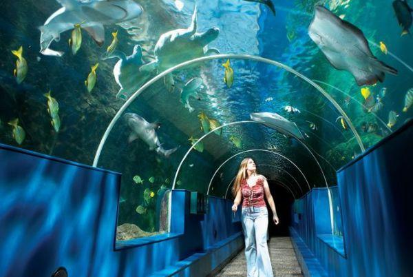 Фото в океанариуме :: Фото Школа