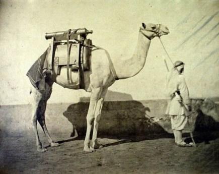 Gustave Le Gray, Dromadaire d´artillerie, Egypte, ca. 1866 Tirage albuminé 24 x 31 cm © Courtesy baudoin lebon, paris