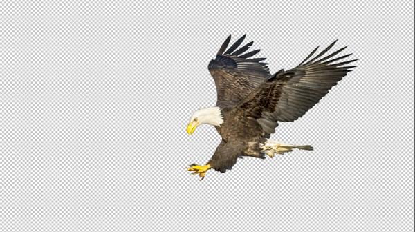 calculations_Eagle9
