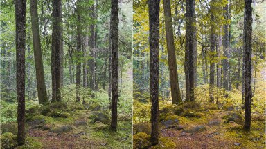 Free Lightroom Preset for Autumn Colors