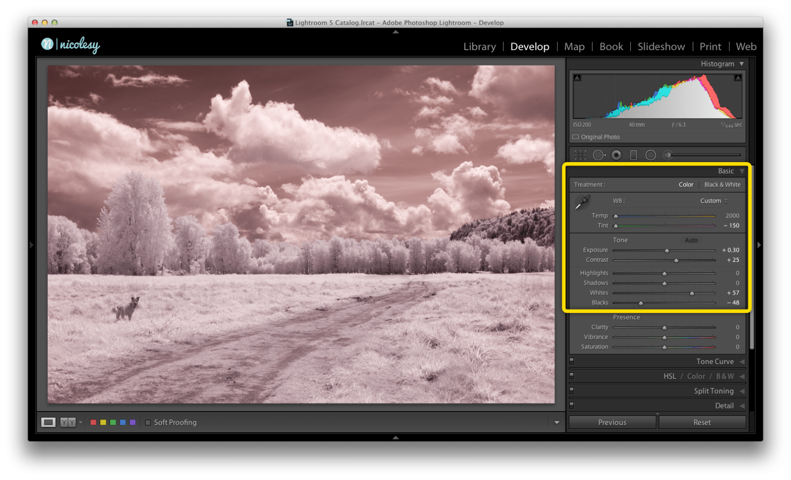 3. Then, I make some changes using the Basic panel in Lightroom.