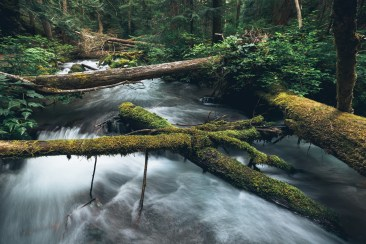 I immediately knew that all of these fallen tree limbs would have to be incorporated into the photo of this stream. They complement each other perfectly.