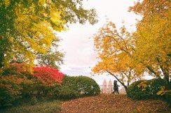 new york autumn - central park bridle path with fall foliage