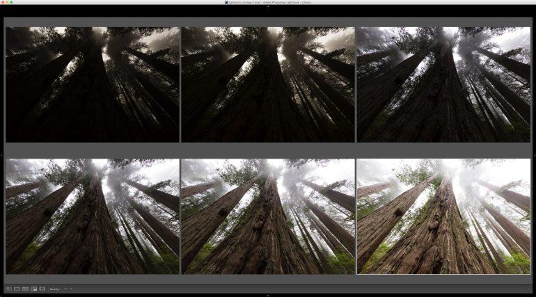 Redwoods Survey