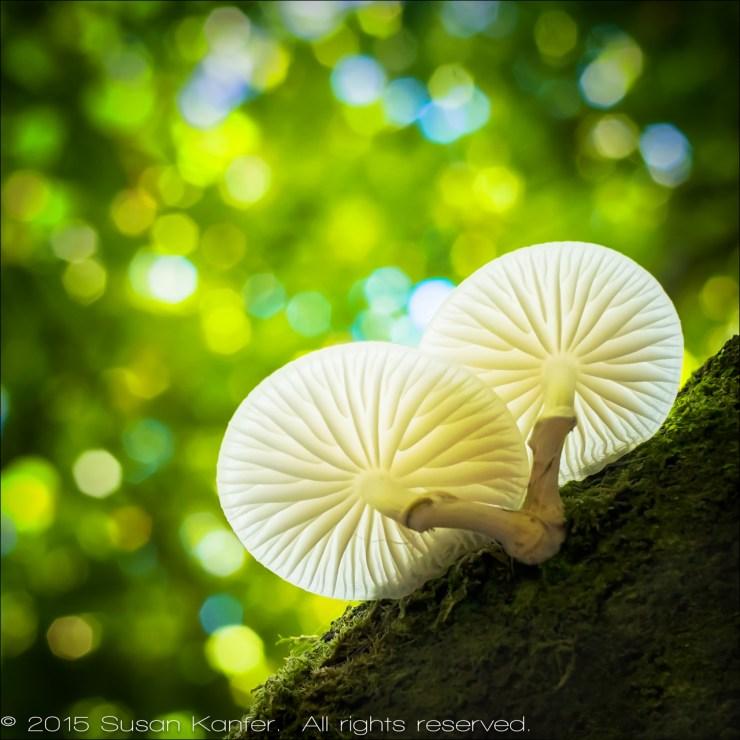 Mushroom, Cornwall
