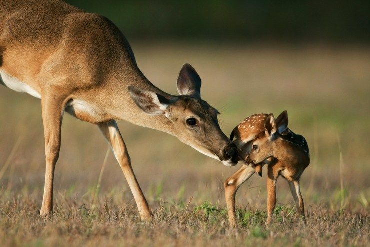 Doting Doe by Seth Patterson