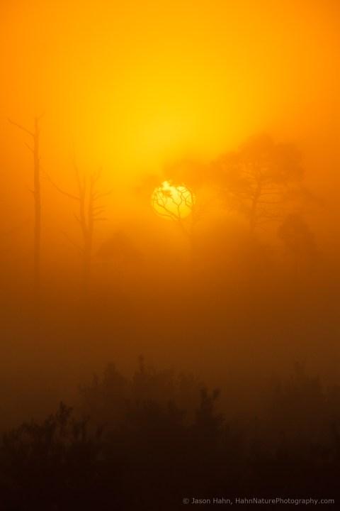 Pine Flatwoods Sunrise