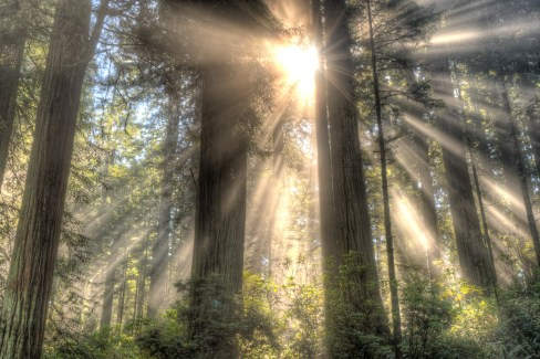 2016-09-16_NorthernCalifornia_Redwoods_0882_3_4_5_6_HDRx