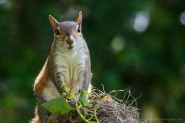 bigsquirrel-remote-set-20170511-0545