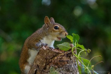 bigsquirrel-remote-set-20170511-0972