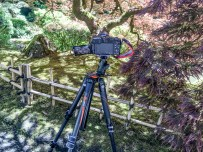 Tripods aren't allowed on moss or rocks or passed fences.