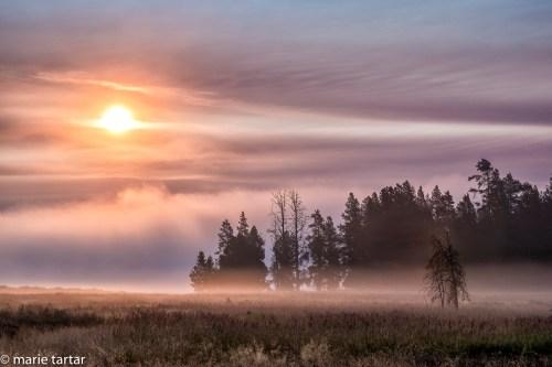 201509_Yellowstone_fog_sunrise_MTartar.jpg