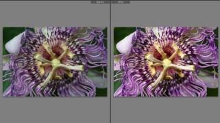 jhahn-lowres-colorcalib-flower2