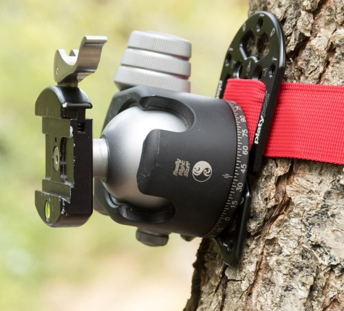 Really Right Stuff BH-55 ballhead mounted to a Platypod Ultra strapped to a tree. ©2017 Kevin Ames
