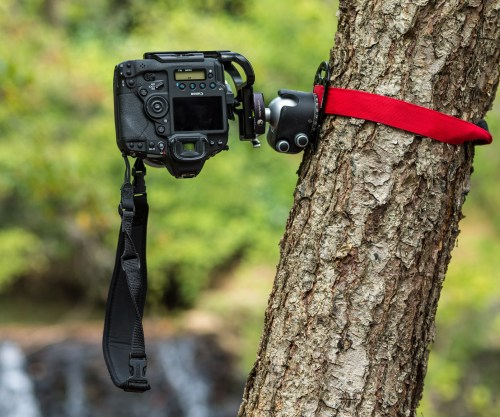 My Canon 1Dx Mark II mounted upside down to a Really Right Stuff BH-55 ballhead attached to a Platypod Ultra strapped to a tree. Whew! ©2017 Kevin Ames
