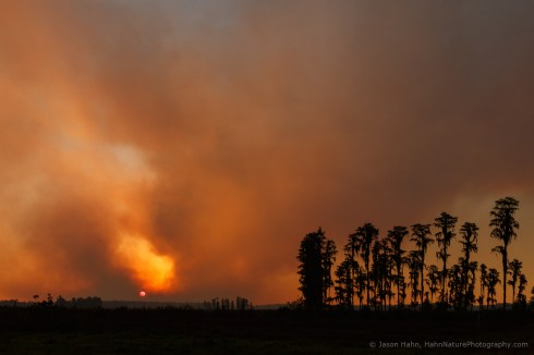 Florida Wildfire at Sunset