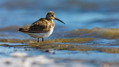 Capturing Wildlife Photos At Tampa Bay Beach