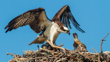 The Life Cycles Approach to Wildlife Photography – Part 2: Capturing the Complete Picture