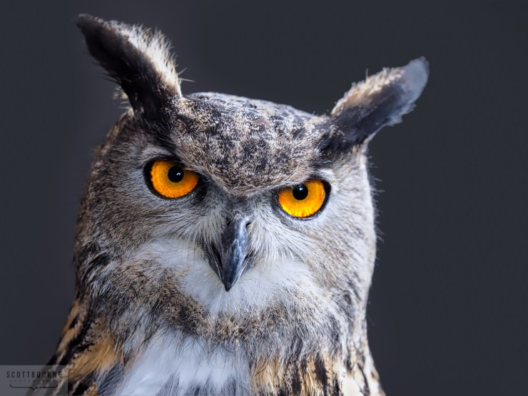 Wisdom of the owl photograph by Scott Bourne