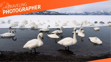 A strip of Lake Kussharo in Hokkaido Japan is geo-thermally heated wnough in winter to stay unfrozen, affording whooper swans a haven.