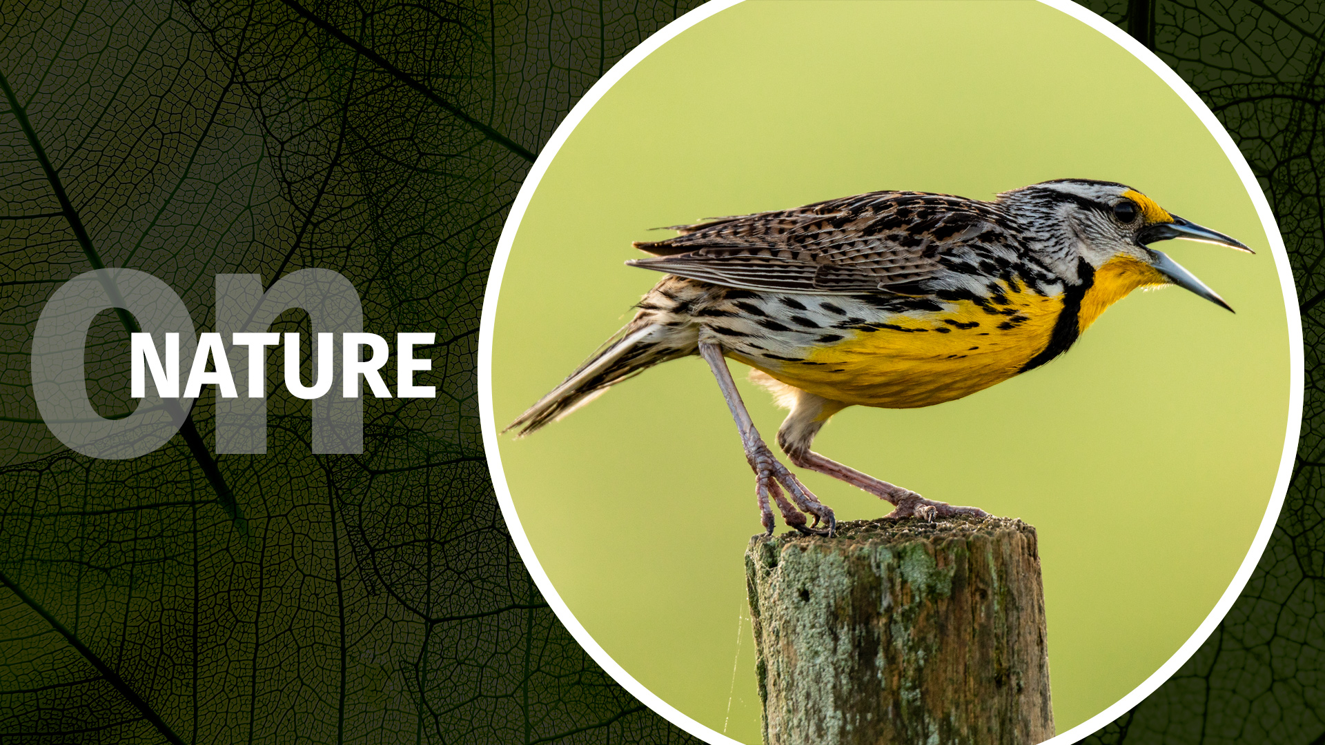The On Nature column by Jason Hahn on Photofocus