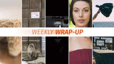 Weekly Wrap-Up: November 4-11, 2018